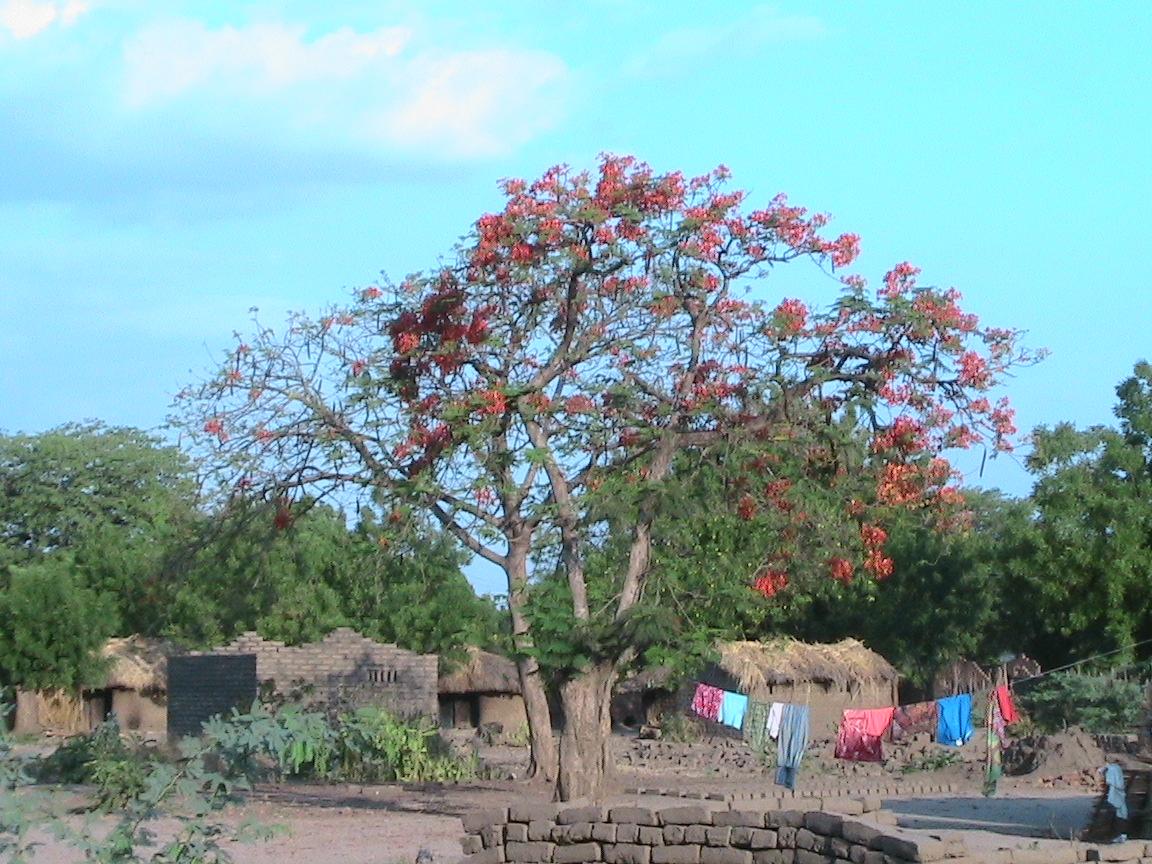 Ein blumiges Dankeschön an Sie liebe Spender, von Active Aid in Africa und Ngona - Tengani, Malawi!